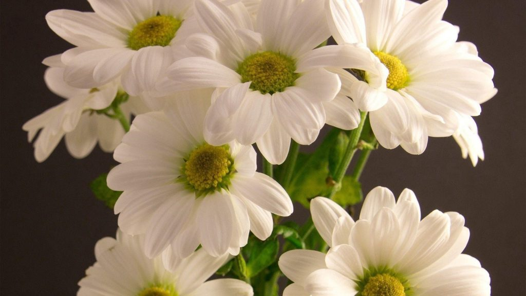 Белый букет цветы лепестки цветы обои скачать