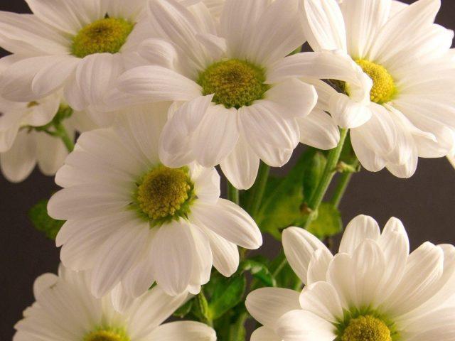 Белый букет цветы лепестки цветы