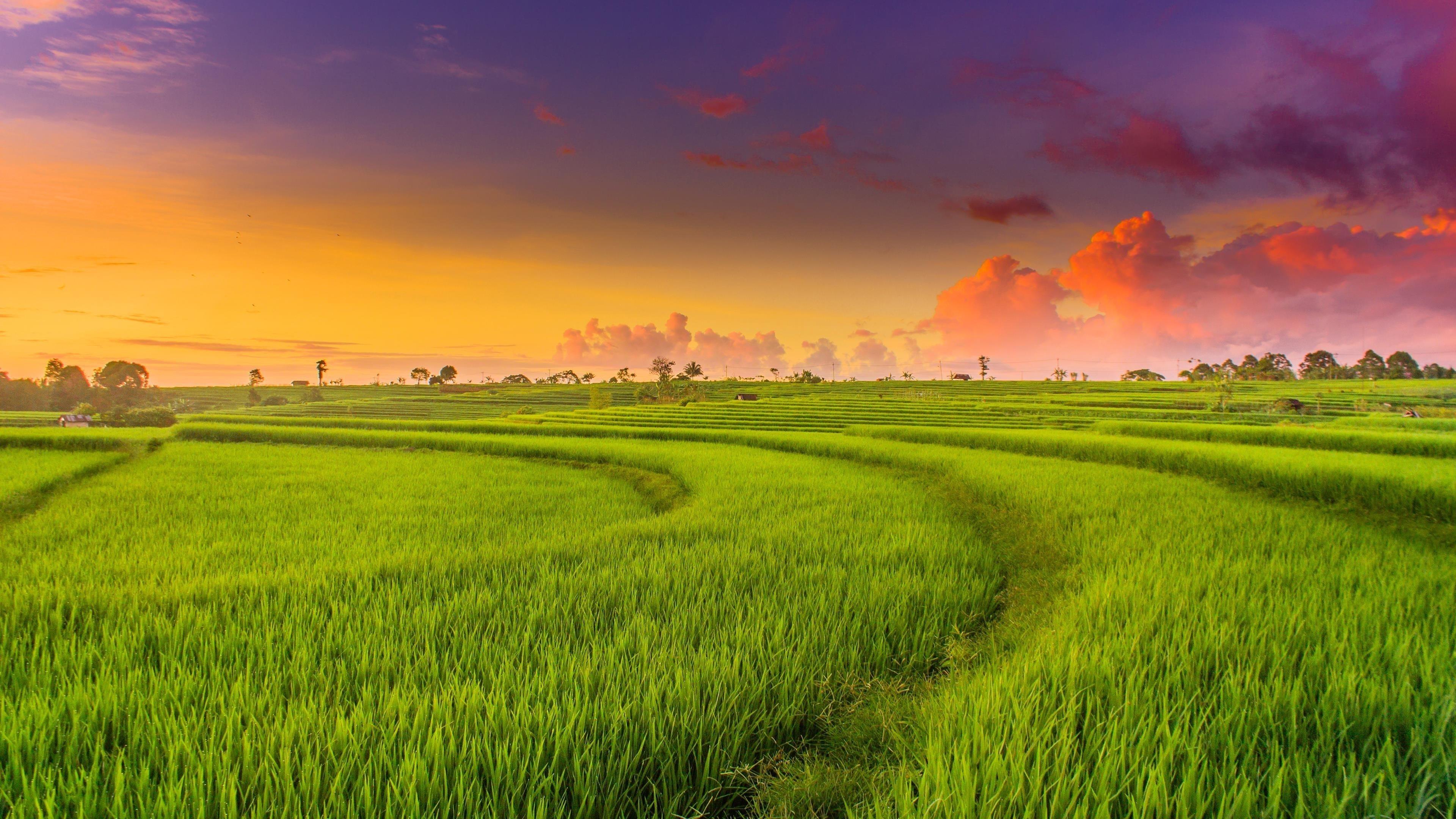 Сельская местность рисовые поля обои скачать