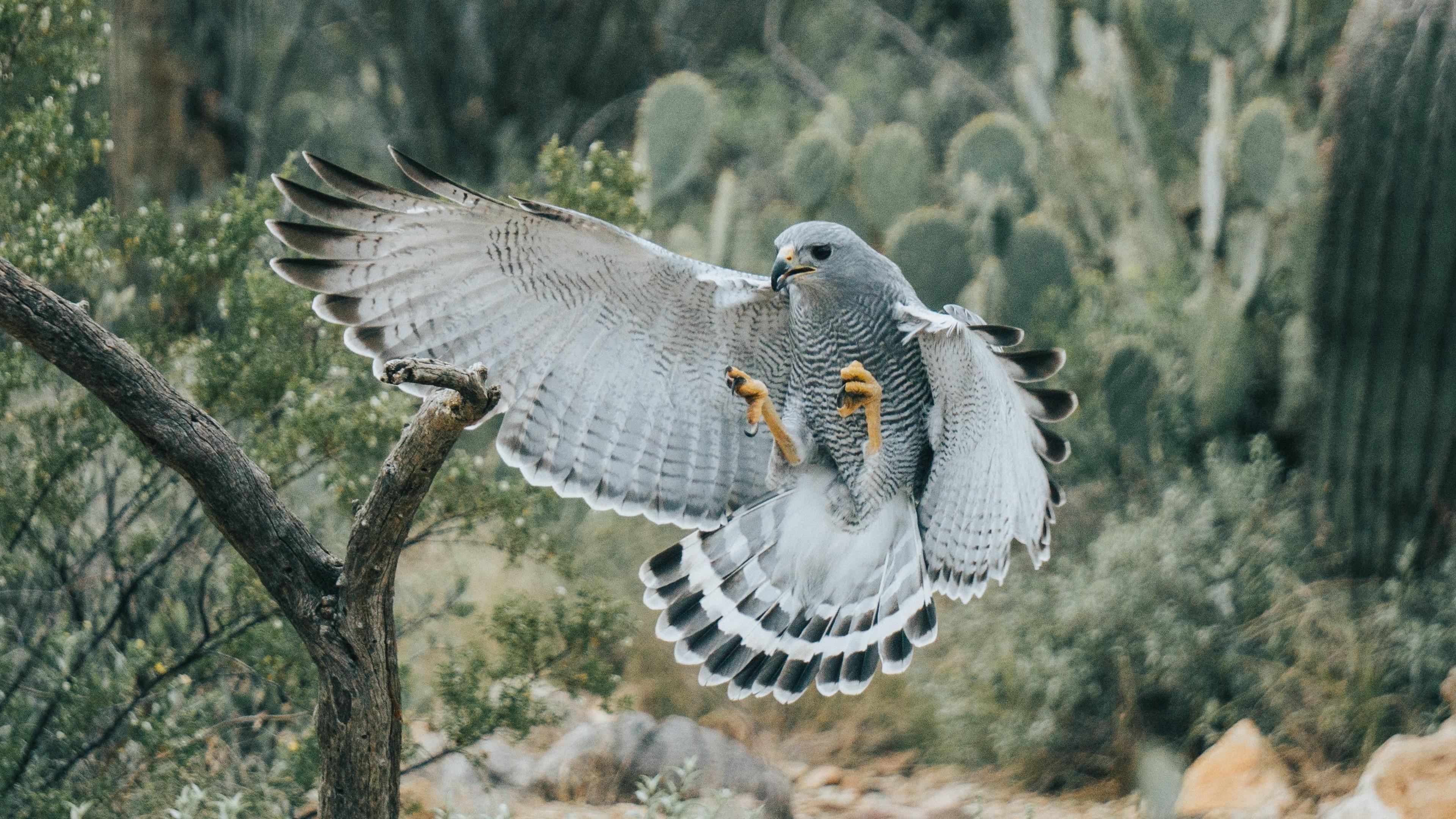 Белый орел обои скачать