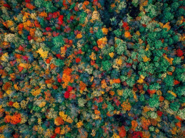 Осенний лес с высоты птичьего полета