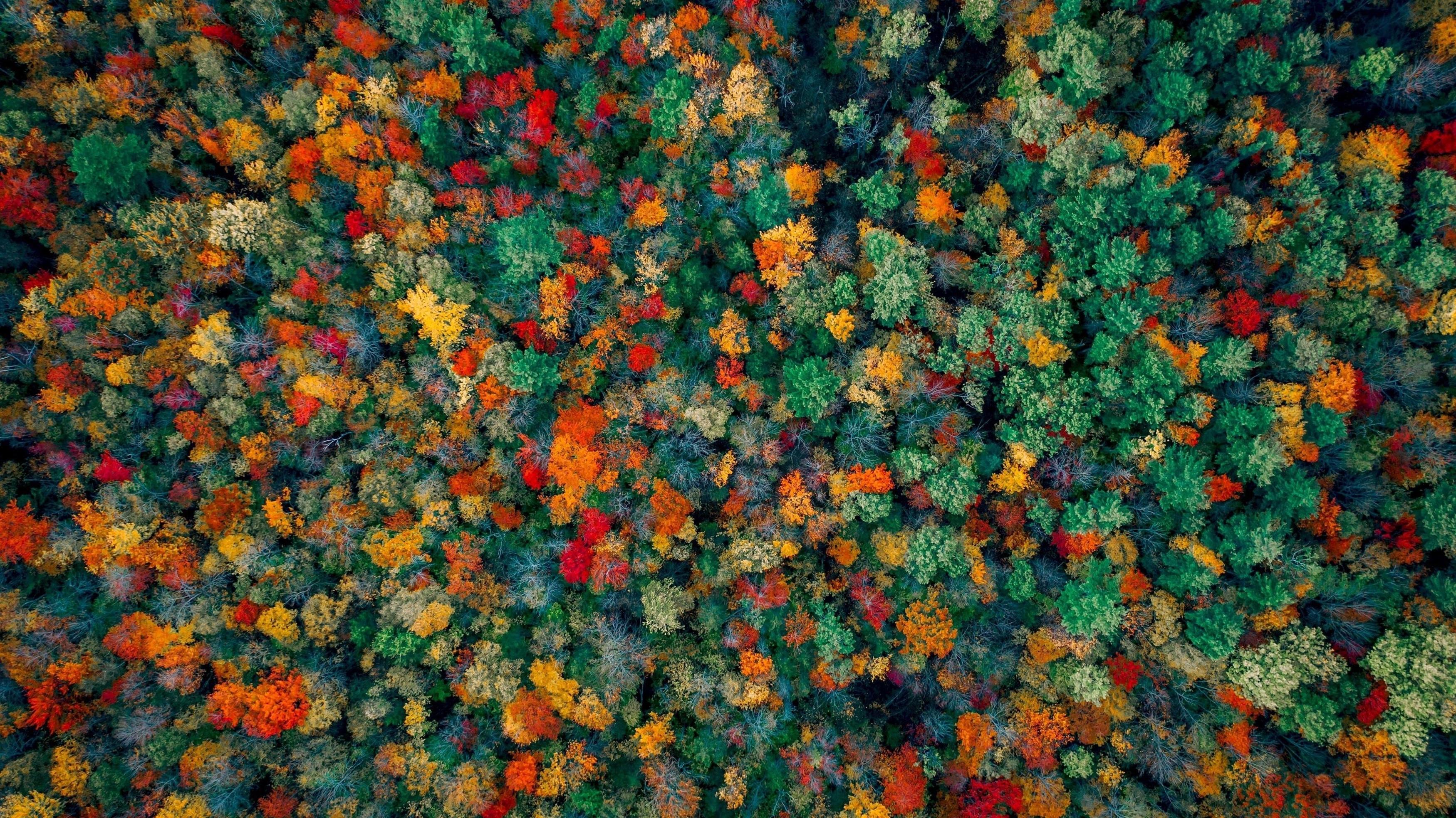 Осенний лес с высоты птичьего полета обои скачать