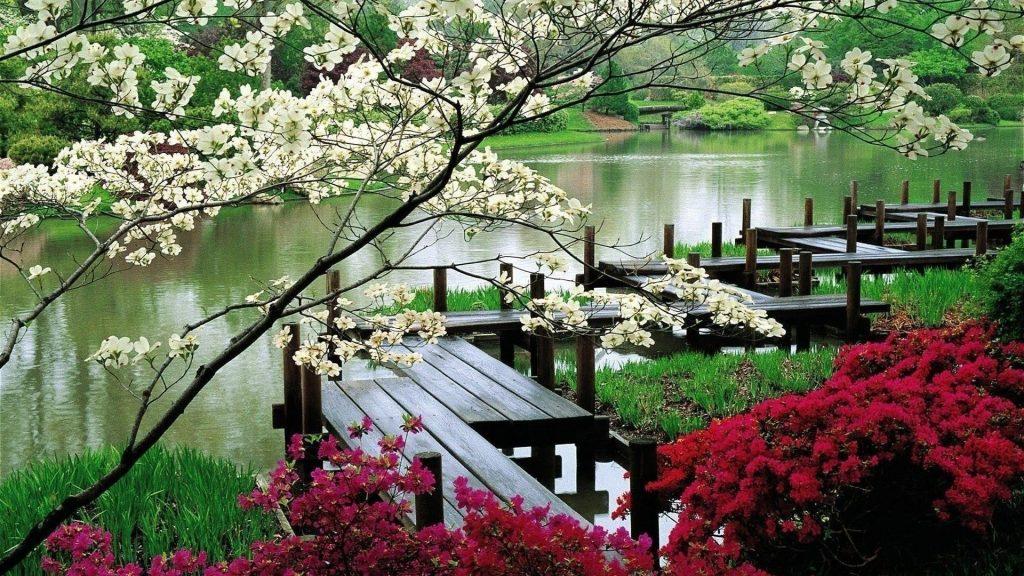 Деревянный мост между красочными цветущими цветами над водой природа обои скачать