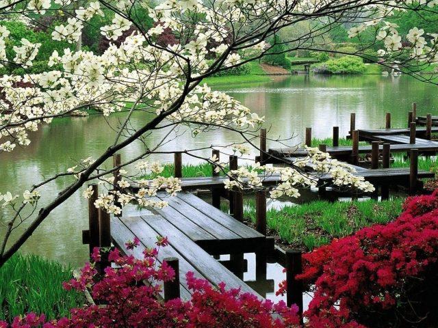 Деревянный мост между красочными цветущими цветами над водой природа