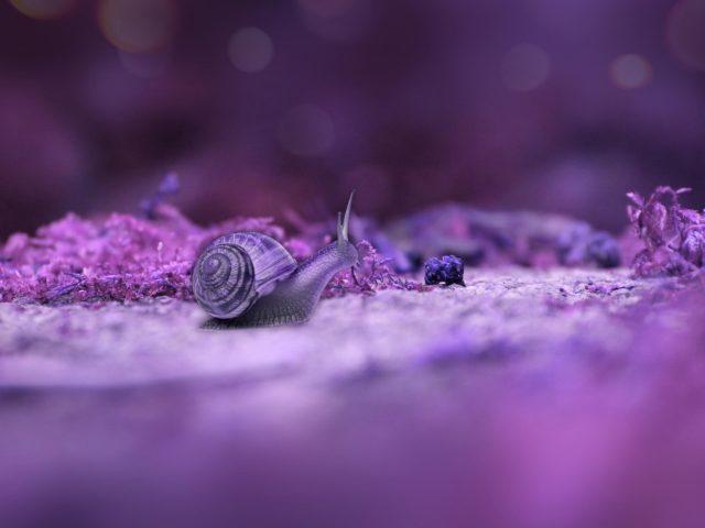Светло-фиолетовая Улитка на земле в сине-фиолетовом фоне животных