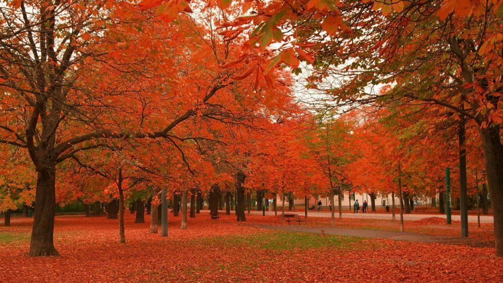 Красные осенние лиственные деревья в парке с деревянными скамейками природа обои скачать