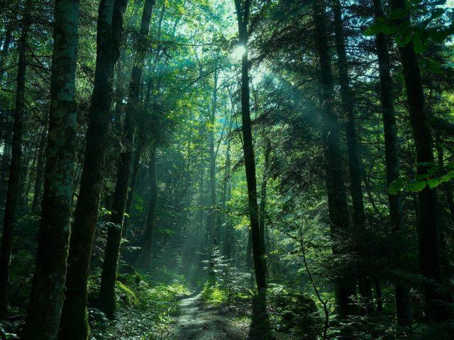 Зелень лес природа тропинка с солнечным лучом природа