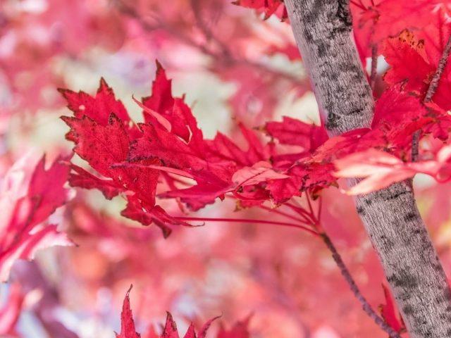 Крупным планом вид красных осенних листьев на синем фоне природы