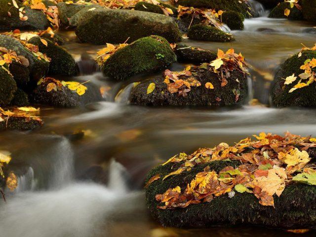 Зеленые покрытые скалы между реками с сухими листьями падают вниз природа
