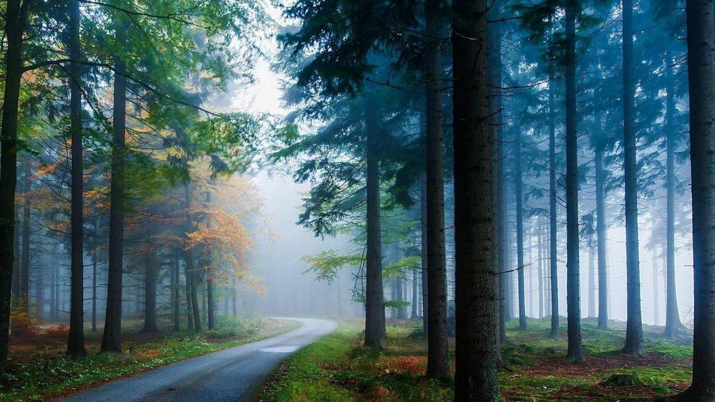Тропинка между длинными зелеными листьями деревьев с туманом в лесной природе обои скачать