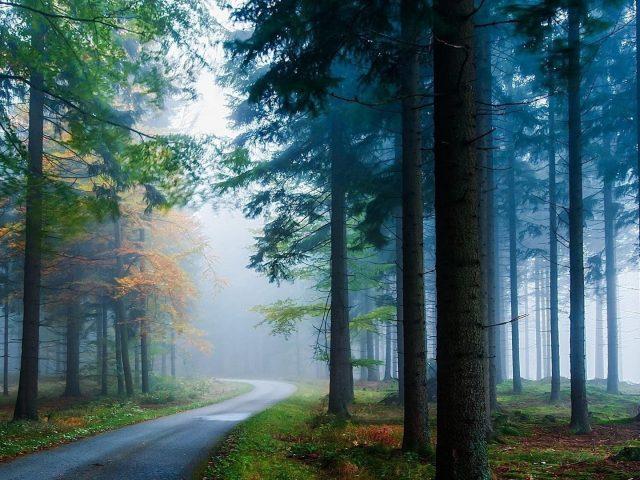 Тропинка между длинными зелеными листьями деревьев с туманом в лесной природе