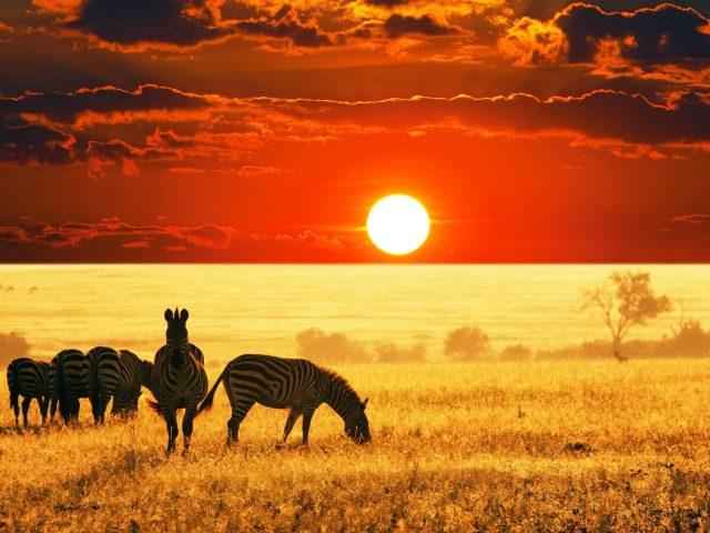 Закат африканской саванны