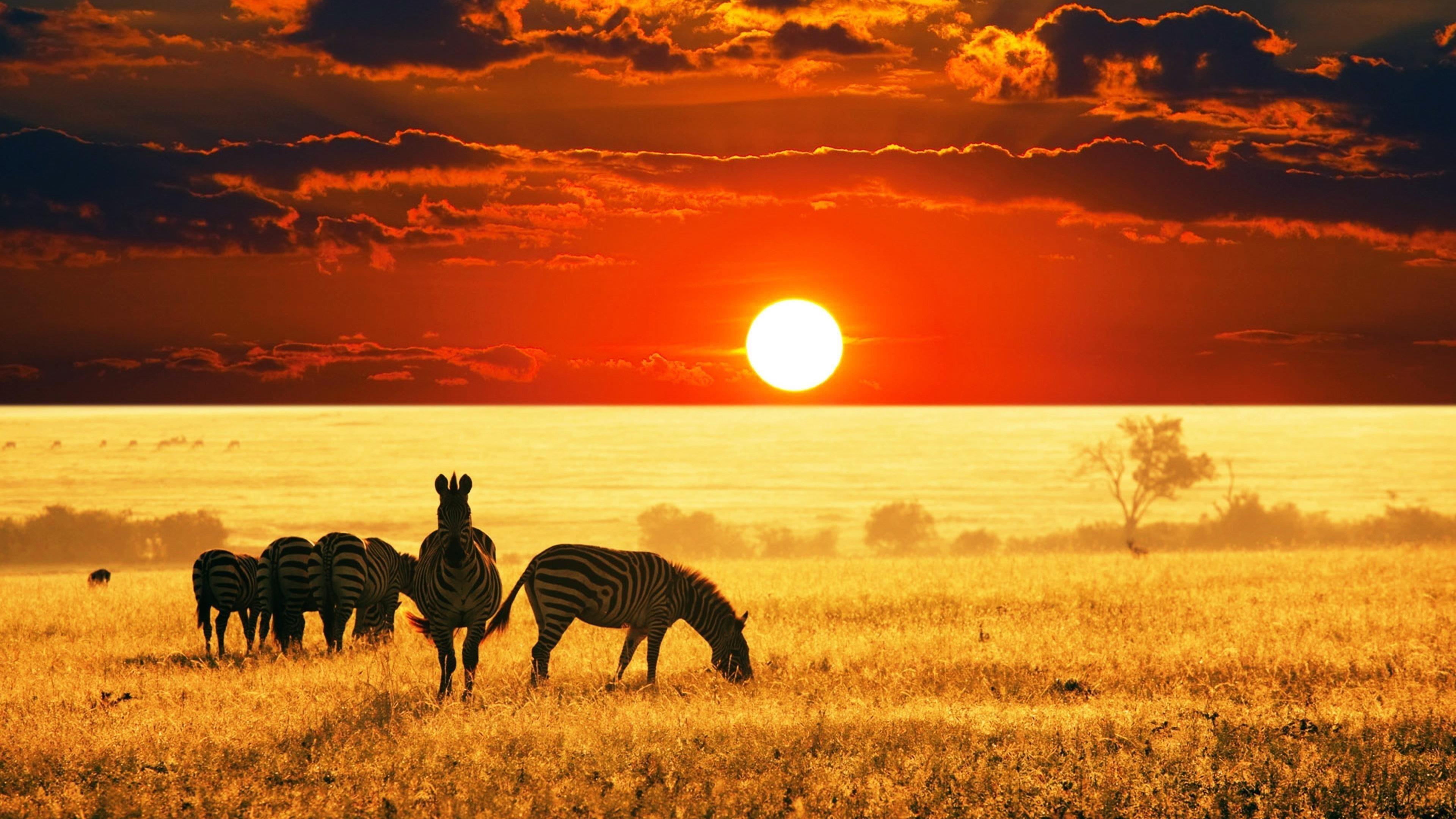 Закат африканской саванны обои скачать