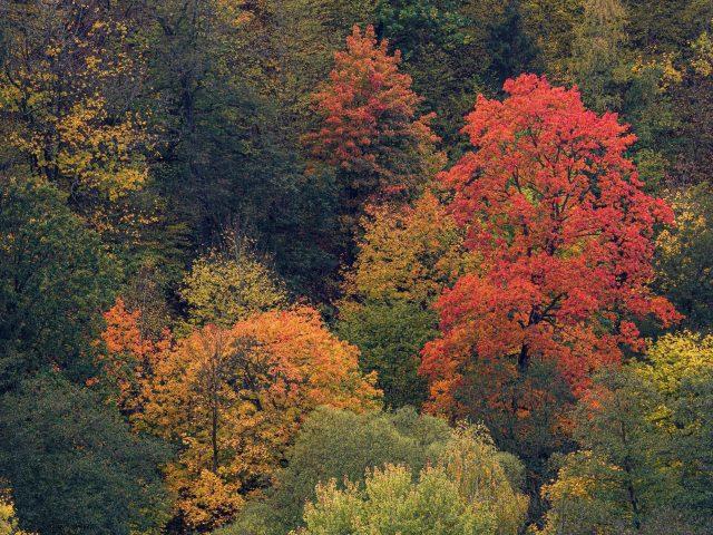 Прекрасный вид с высоты птичьего полета на красные желто-зеленые осенние деревья лесная природа