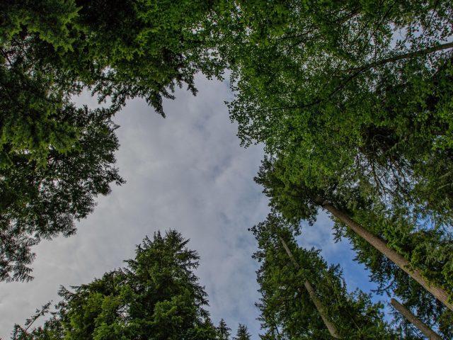 Деревья лес вид снизу