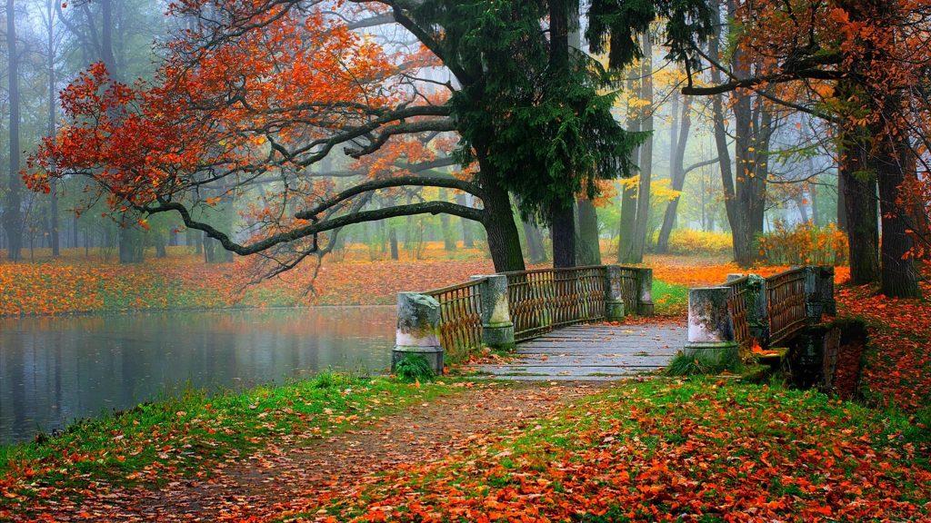 Бетонный мост между красочным осенним парком с опавшими сухими листьями природы обои скачать