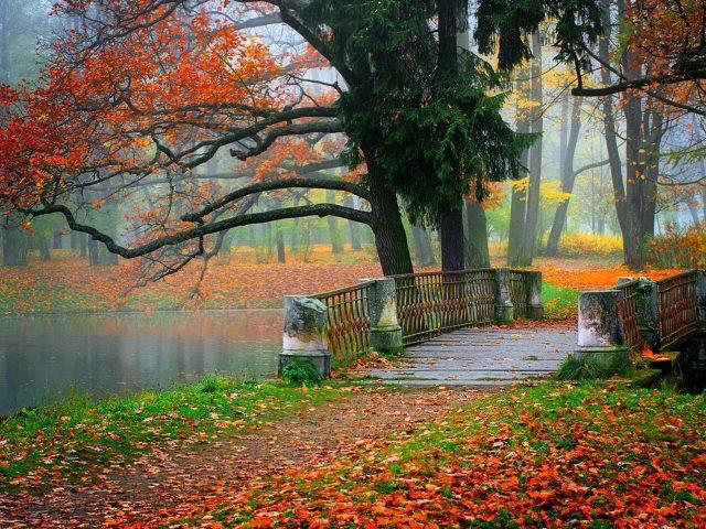 Бетонный мост между красочным осенним парком с опавшими сухими листьями природы