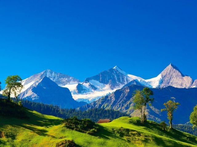 Пейзаж вид белых покрытых гор и деревьев покрытых лесом под голубым небом в дневное время природа
