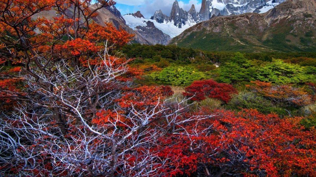 Пейзажный вид на покрытые снегом и зелеными деревьями горы природа обои скачать