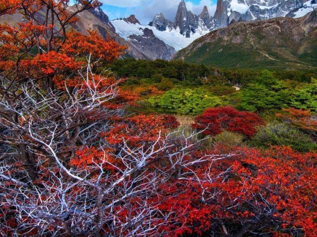 Пейзажный вид на покрытые снегом и зелеными деревьями горы природа