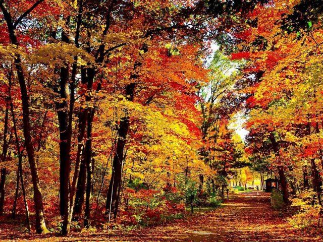 Желтый красный зеленый осень осенние деревья природа лесной фон осень