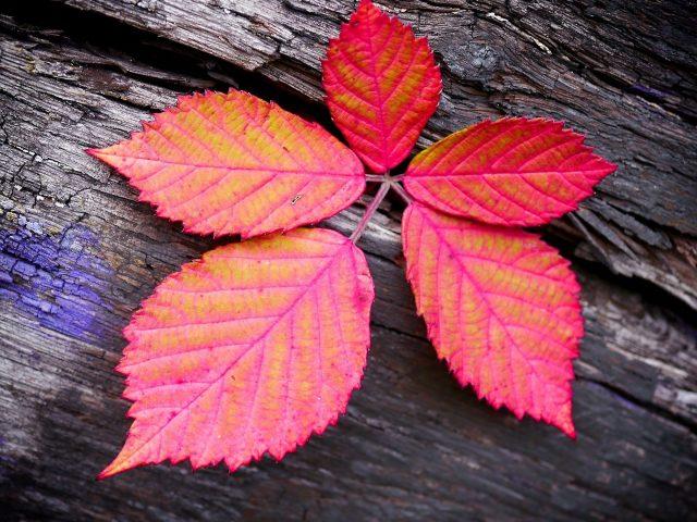 Крупным планом вид красных листьев на древесном стволе природа