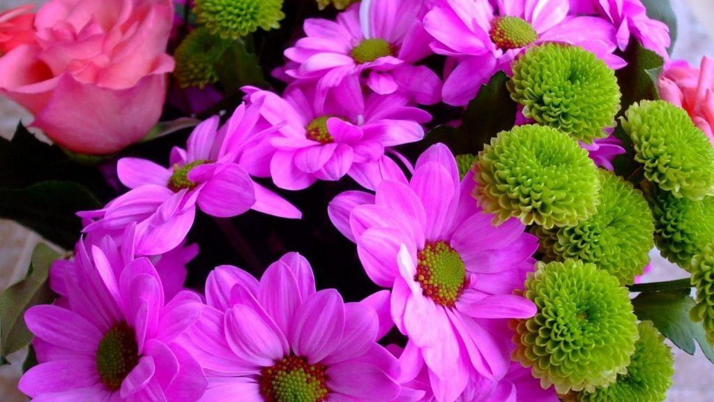 Красочные хризантемы розы цветы цветы обои скачать