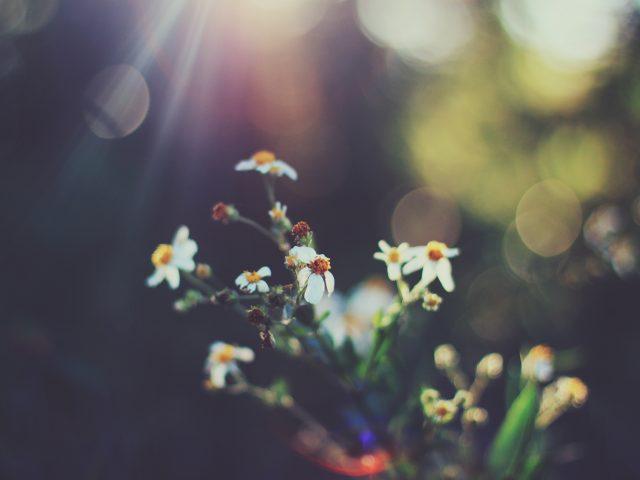 Цветение боке