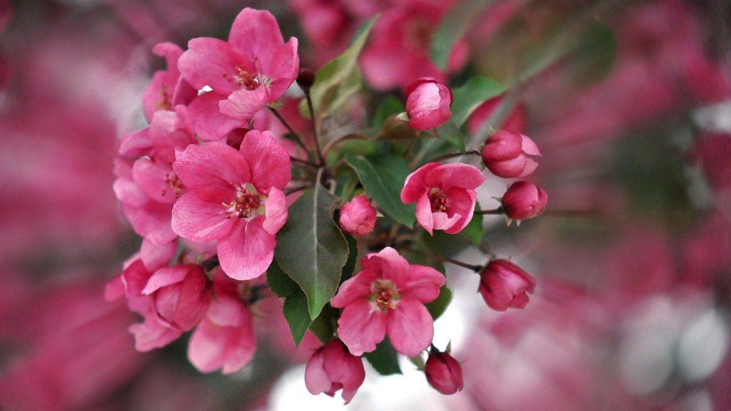 Цвет розовые лепестки растения цветы обои скачать