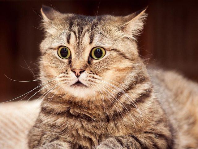 Желтые черные глаза карие черные усы кошка на размытом фоне милая кошка