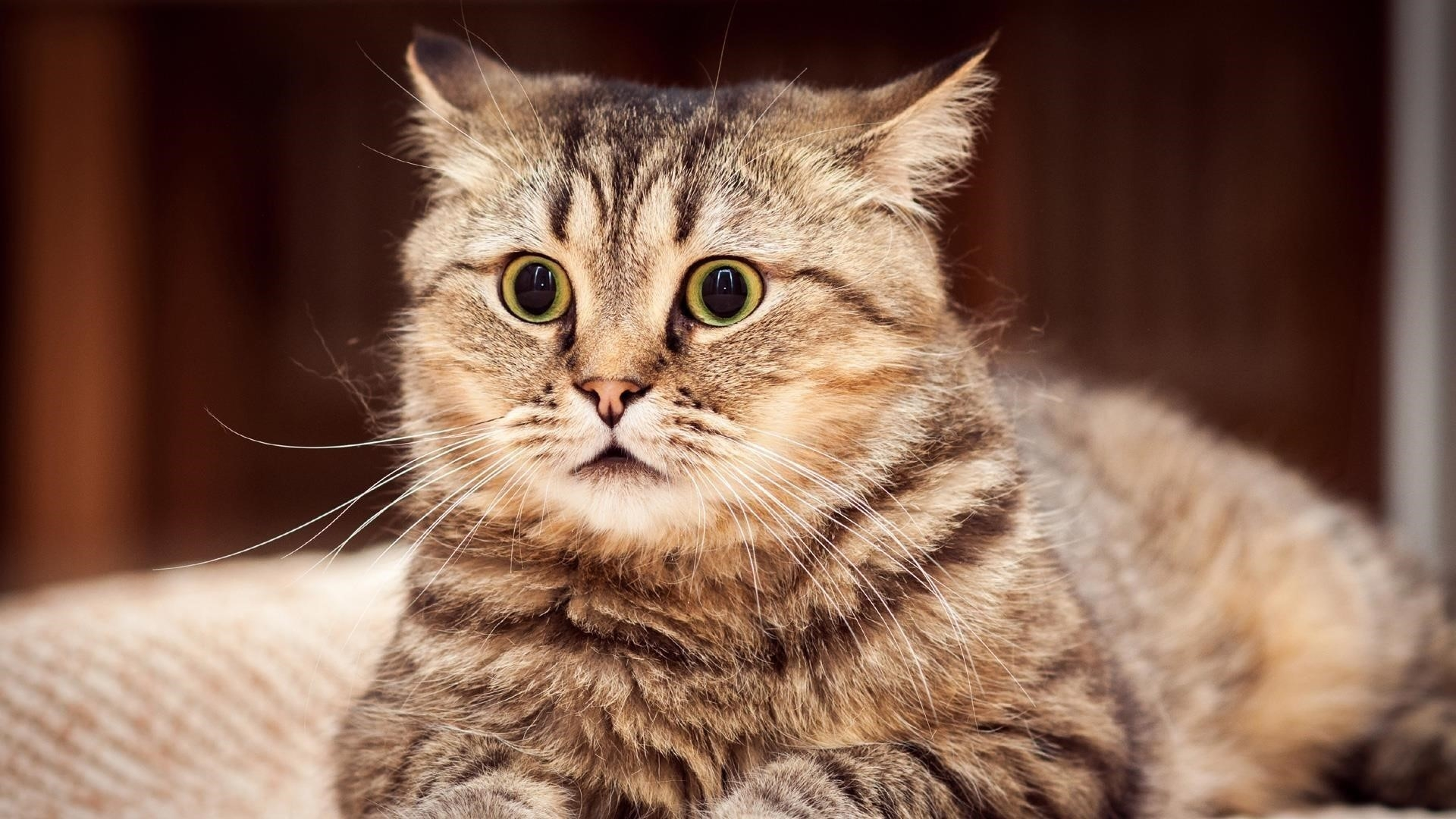 Желтые черные глаза карие черные усы кошка на размытом фоне милая кошка обои скачать