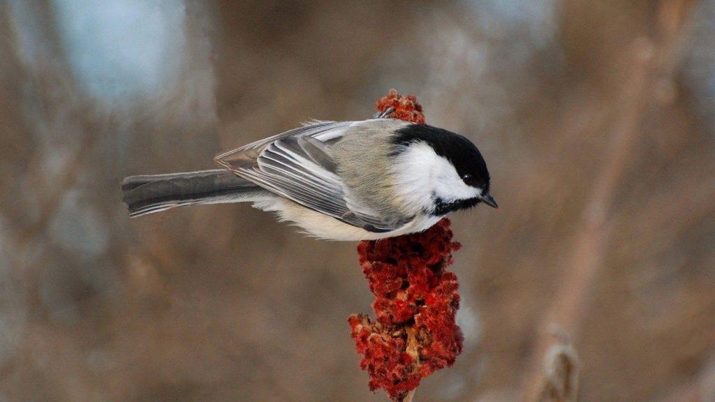 Черно-белое перо птицы на цветке в размытом фоне птицы обои скачать