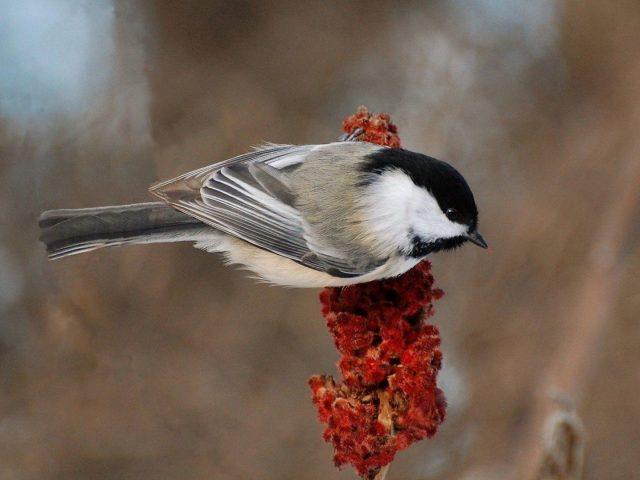 Черно-белое перо птицы на цветке в размытом фоне птицы