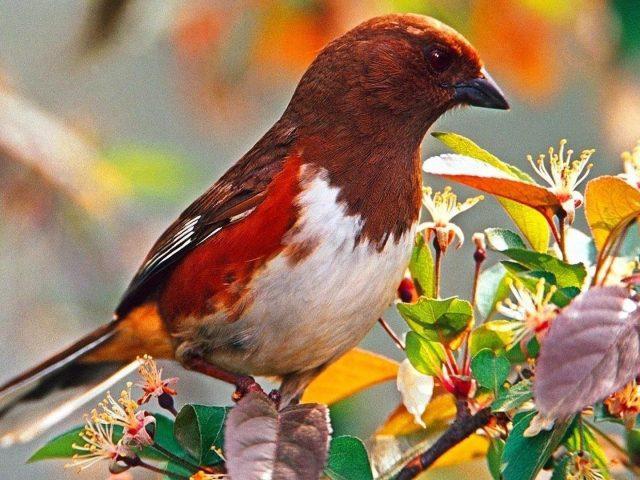 Коричневая белая красная птица сидит на листьях птицы