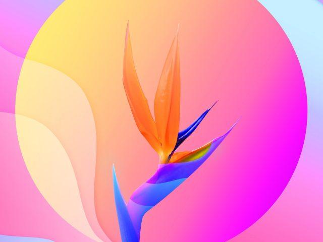 Красочный абстрактный цветок