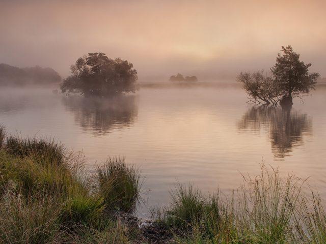Утро,  туман,  озеро,  деревья