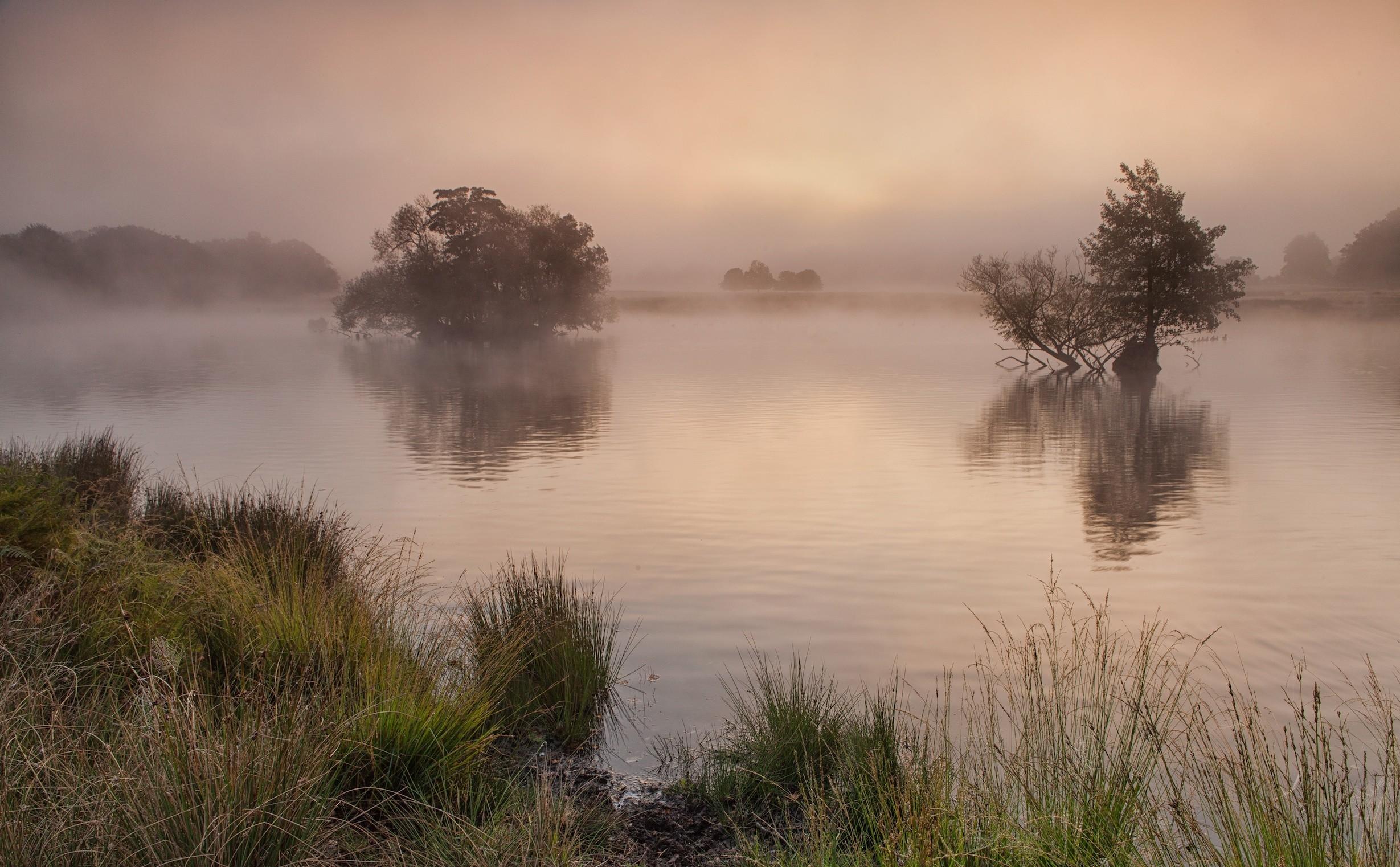Утро, туман, озеро, деревья обои скачать
