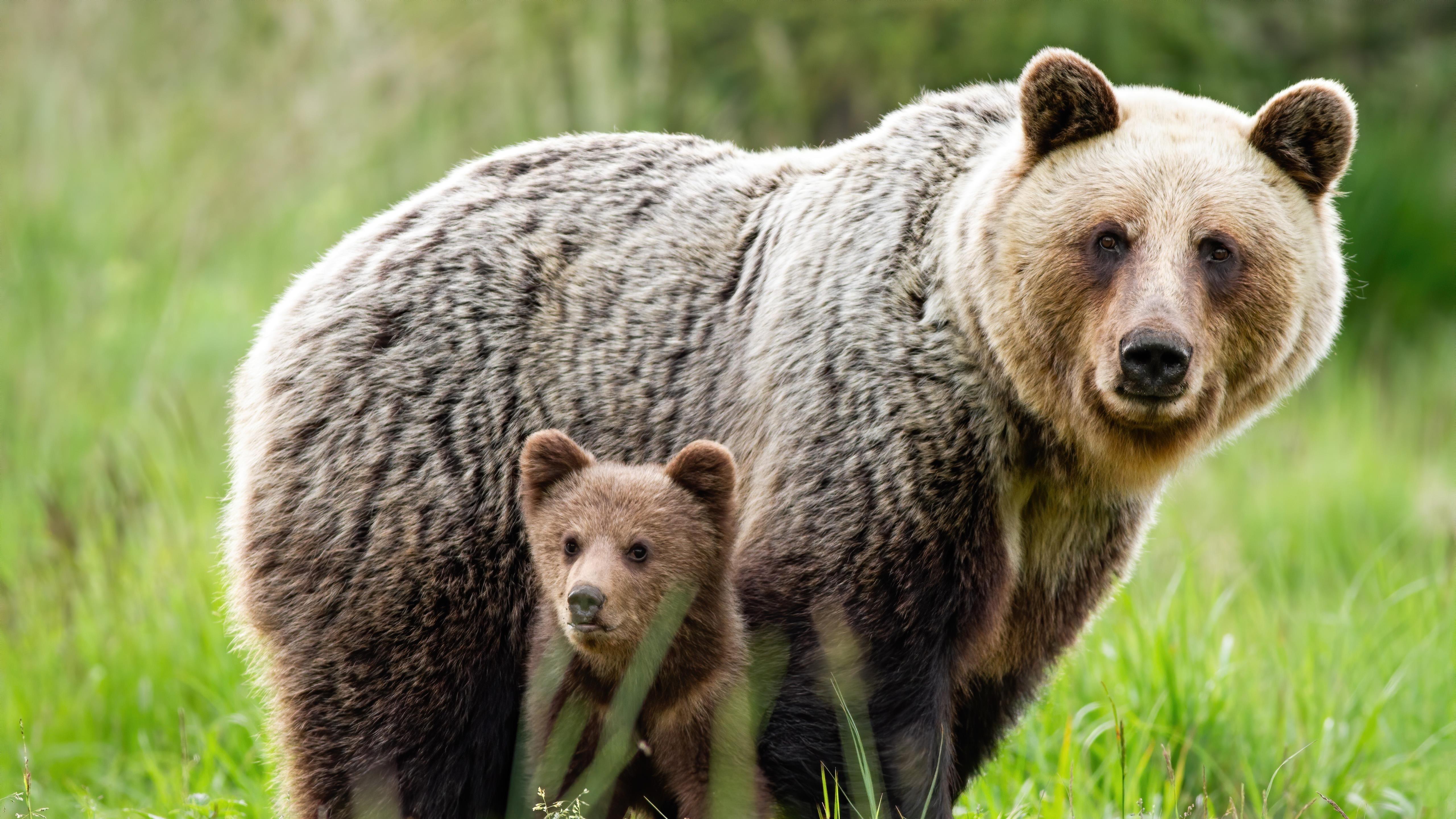 Животное медведь 5 животных обои скачать