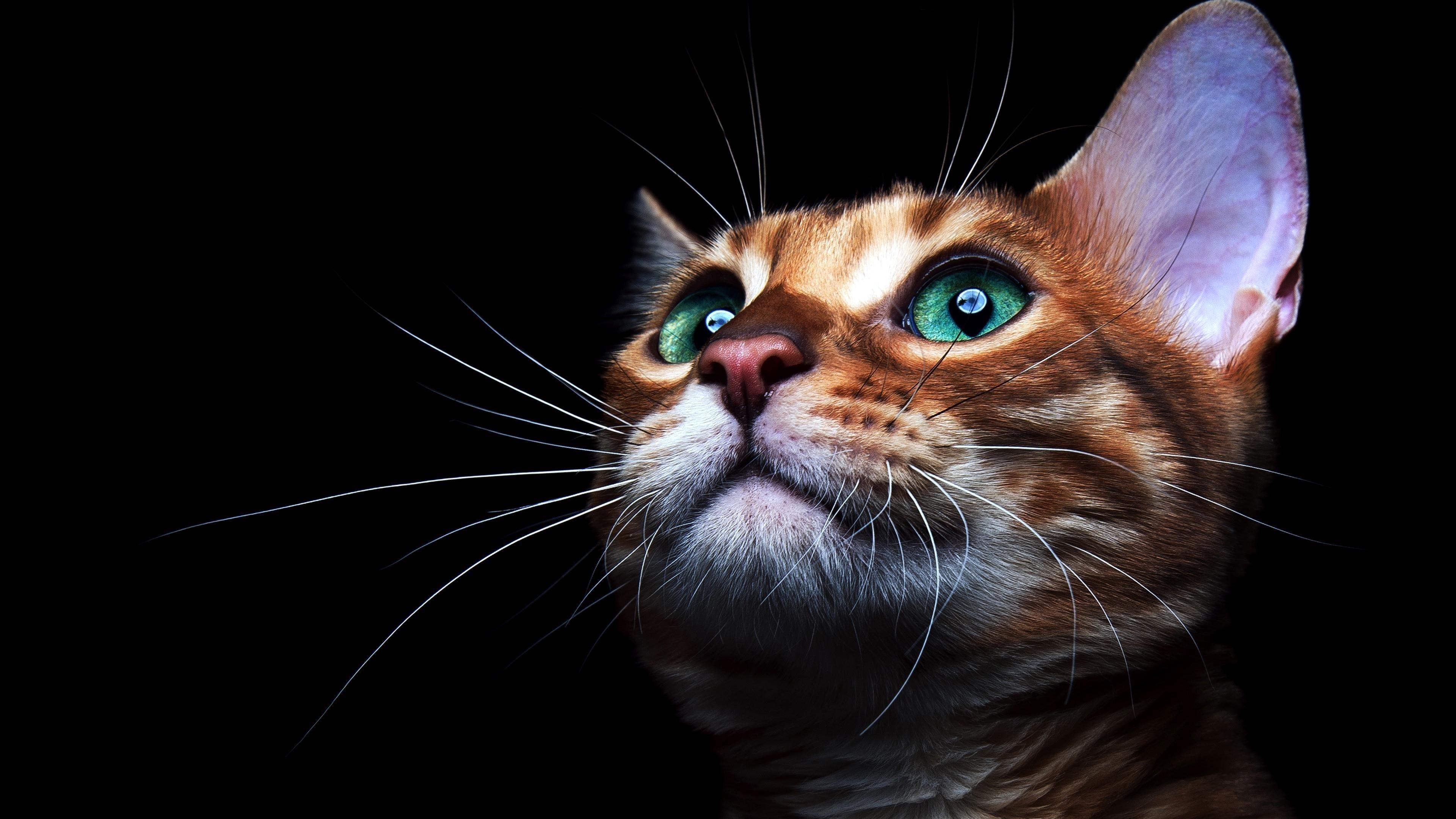 Cat deep sea green eyes обои скачать