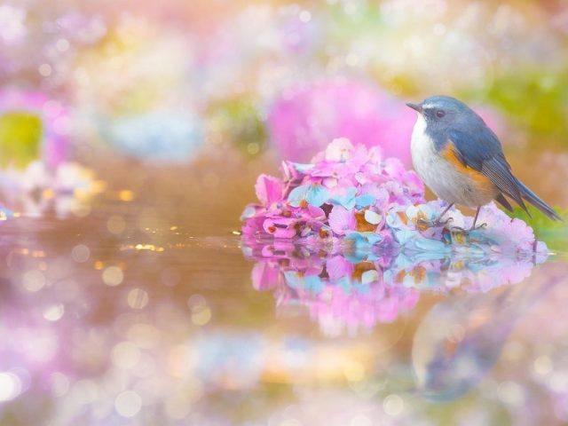 Синяя птица сидит на водоеме в дневное время 3 животных