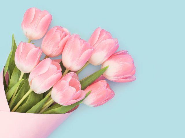 Детские розовые тюльпаны