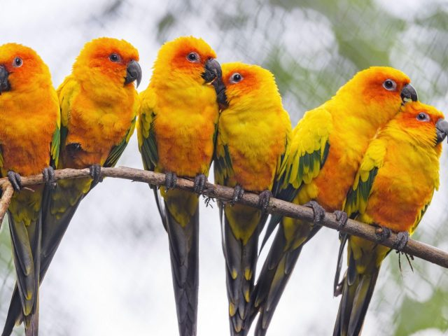 Желто-зеленые попугаи птицы на ветке дерева в бело-зеленом размытом фоне боке птицы
