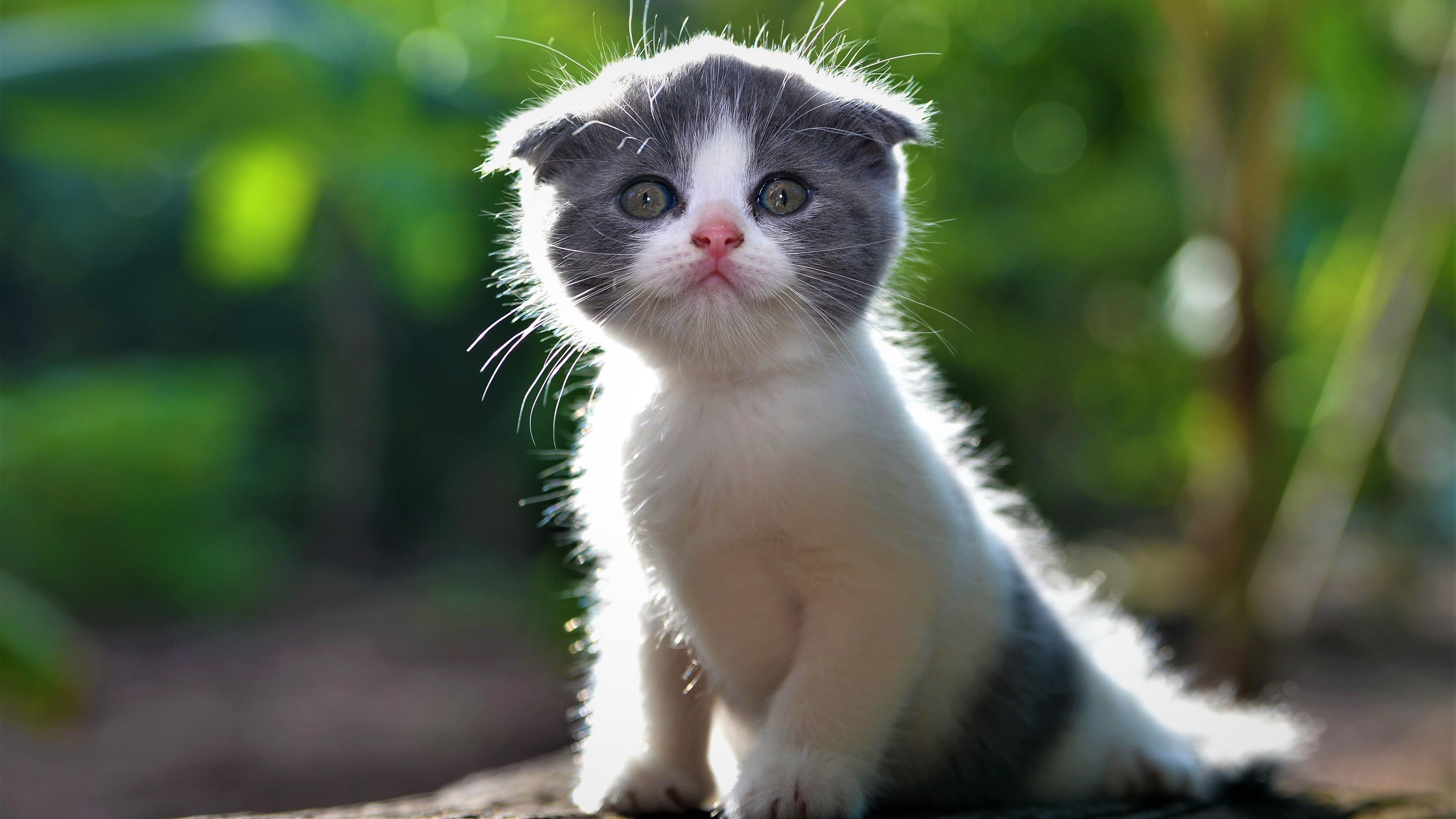 Животное кошка 1 животные обои скачать