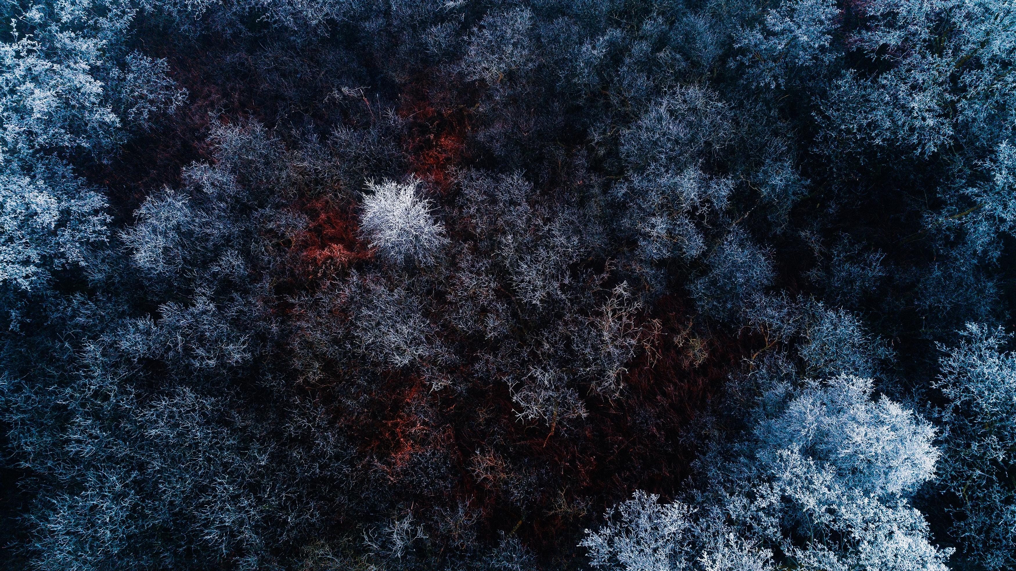 Замороженные лес. обои скачать