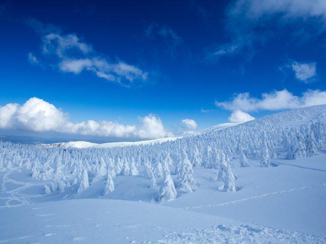 Пейзаж заснеженных сосен в снежном поле лес под голубым облачным небом природа