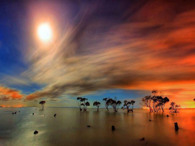 Деревья посреди водоема под сумеречным облачным небом с лунной природой