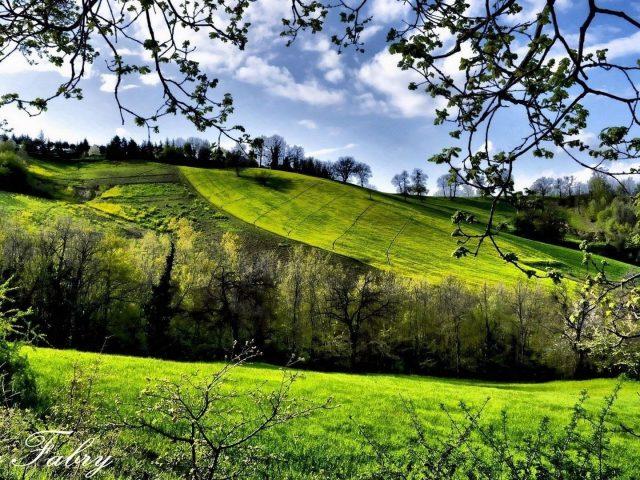 Зеленый склон горы с деревьями под облачным голубым небом природа