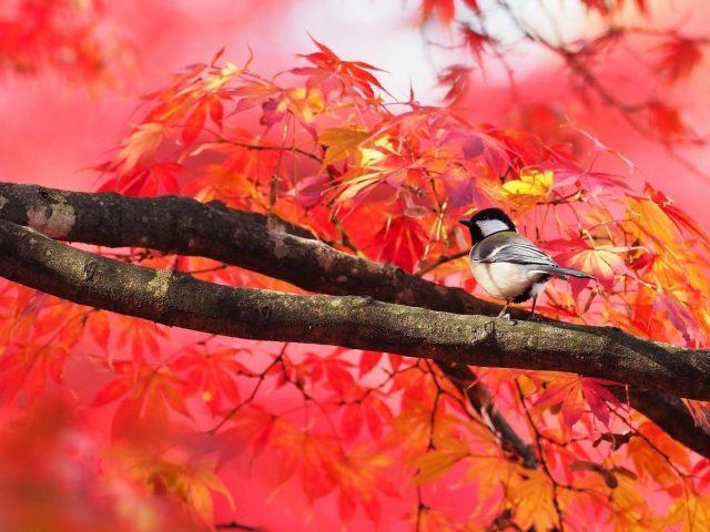 Маленькая птичка сидит на ветке дерева с разноцветными листьями рядом животные
