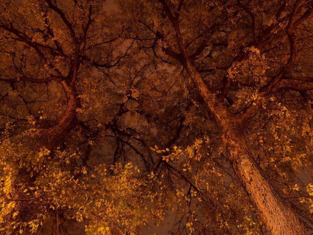 Вид сверху на деревья с желтыми листьями во время осенней природы