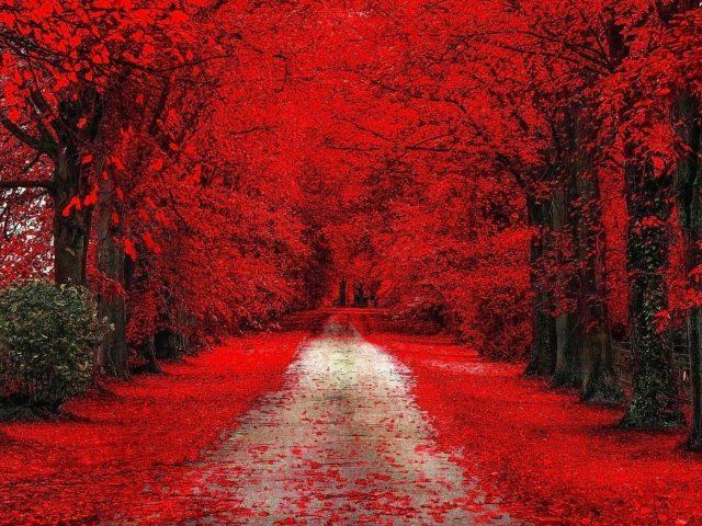 Осенние листья на дороге между красными вишнями цветут в дневное время природа